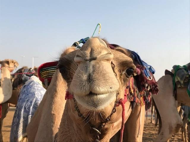 Girls' trip: Dubai